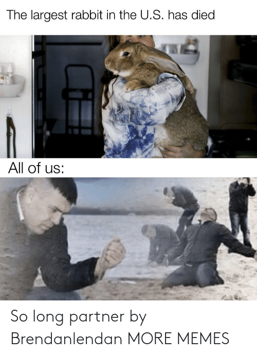 The U: The largest rabbit in the U.S. has died  All of us: So long partner by Brendanlendan MORE MEMES