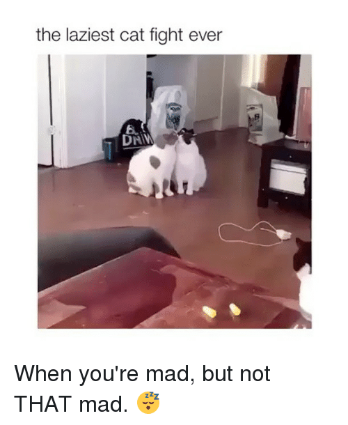 cat fighting: the laziest cat fight ever  6. When you're mad, but not THAT mad. 😴