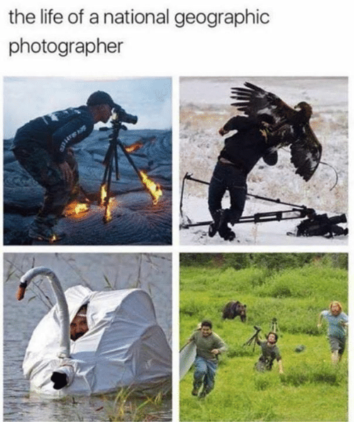 Life, Memes, and National Geographic: the life of a national geographic  photographer