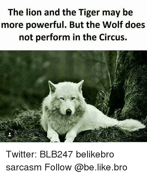 Be Like, Memes, and Lion: The lion and the Tiger may be  more powerful. But the Wolf does  not perform in the Circus. Twitter: BLB247 belikebro sarcasm Follow @be.like.bro