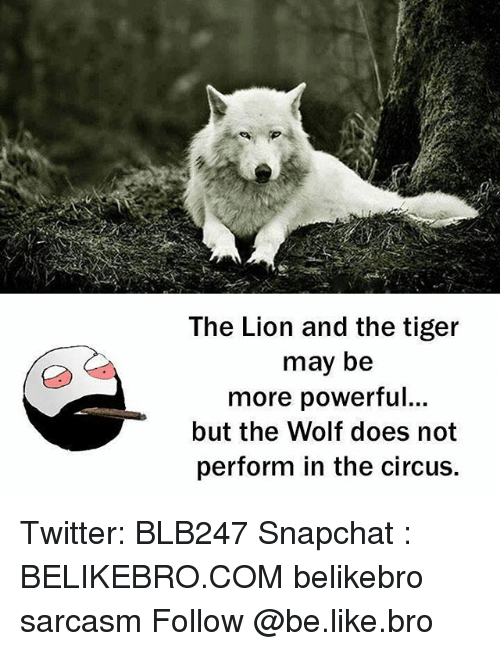 Memes, 🤖, and  the Circus: The Lion and the tiger  may be  more powerful...  but the Wolf does not  perform in the circus. Twitter: BLB247 Snapchat : BELIKEBRO.COM belikebro sarcasm Follow @be.like.bro