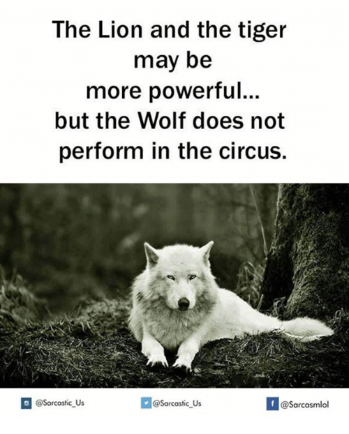 Tiger, Tigers, and May: The Lion and the tiger  may be  more powerful...  but the Wolf does not  perform in the circus.  @sarcastic us  If @@sarcastic Us  @Sarcasmlol