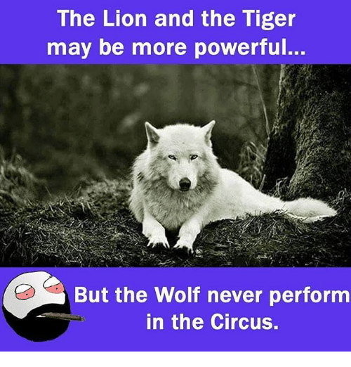 Memes, Lion, and Tiger: The Lion and the Tiger  may be more powerful..  But the Wolf never perform  in the Circus.
