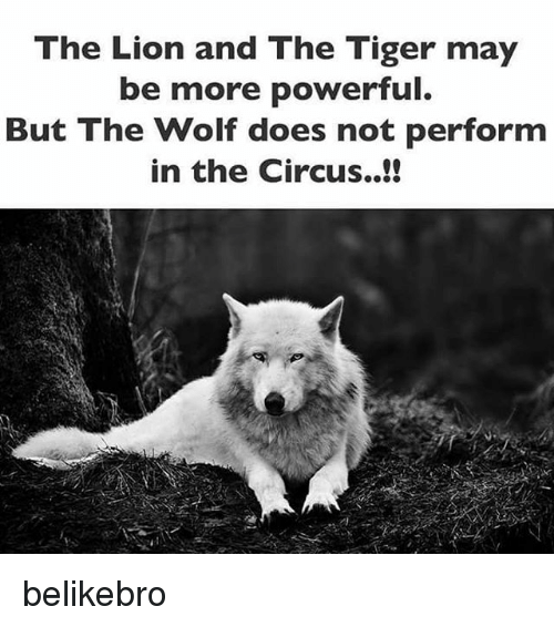 Memes, Lion, and Tiger: The Lion and The Tiger may  be more powerful  But The Wolf does not perform  in the Circus. belikebro