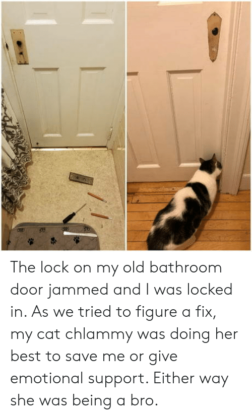 Best, Old, and Her: The lock on my old bathroom door jammed and I was locked in. As we tried to figure a fix, my cat chlammy was doing her best to save me or give emotional support. Either way she was being a bro.