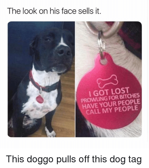 Dank, Lost, and 🤖: The look on his face sells it.  I GOT LOST  PROWLING FOR BITCHES  HAVE YOUR PEOPLE  CALL MY PEOPLE This doggo pulls off this dog tag