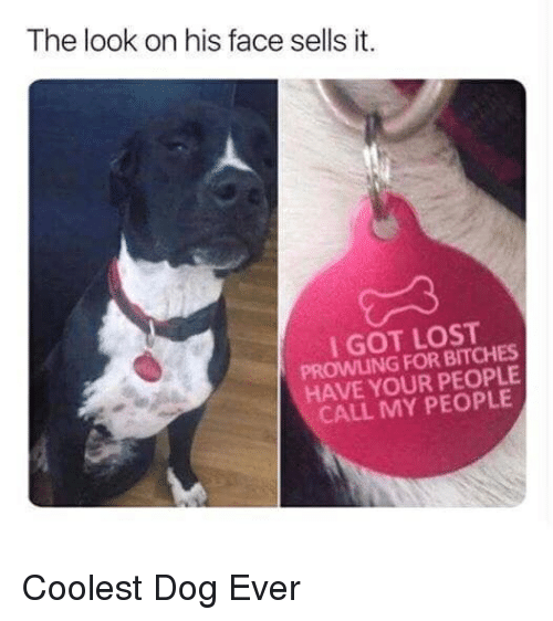 Lost, Good, and Got: The look on his face sells it.  I GOT LOST  PROWLING FOR BITCHES  HAVE YOUR PEOPLE  CALL MY PEOPLE Coolest Dog Ever