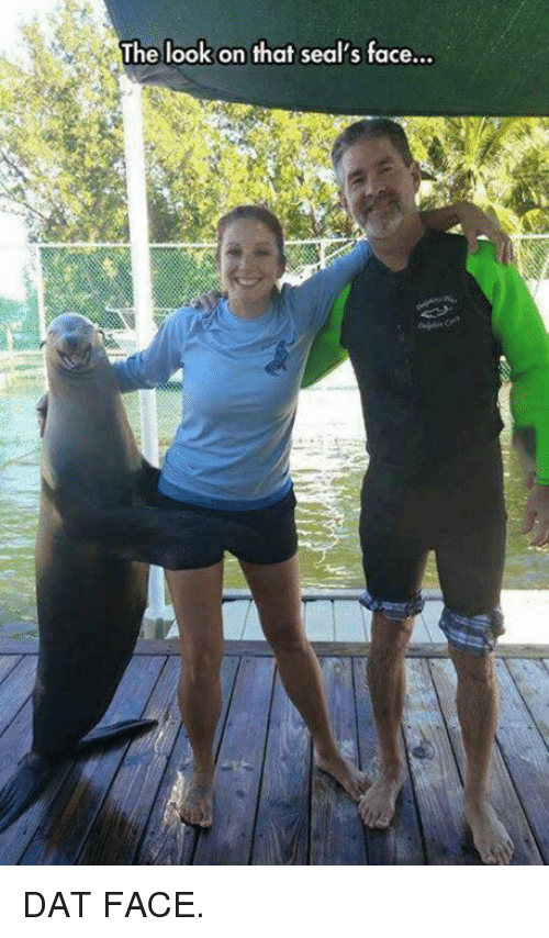 dat face: The look on that seal's face... DAT FACE.
