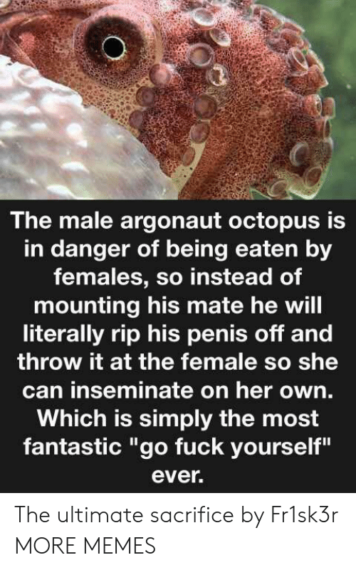 "Dank, Memes, and Target: The male argonaut octopus is  in danger of being eaten by  females, so instead of  mounting his mate he will  literally rip his penis off and  throw it at the female so she  can inseminate on her own.  Which is simply the most  fantastic ""go fuck yourself""  ever. The ultimate sacrifice by Fr1sk3r MORE MEMES"