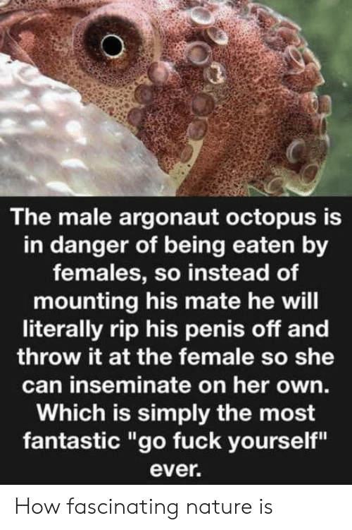 "Octopus: The male argonaut octopus is  in danger of being eaten by  females, so instead of  mounting his mate he will  literally rip his penis off and  throw it at the female so she  can inseminate on her own.  Which is simply the most  fantastic ""go fuck yourself""  ever. How fascinating nature is"