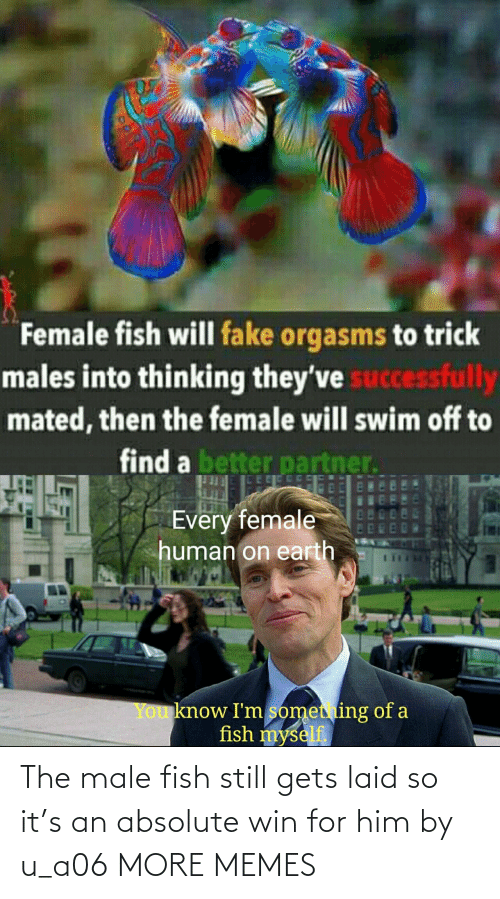 win: The male fish still gets laid so it's an absolute win for him by u_a06 MORE MEMES