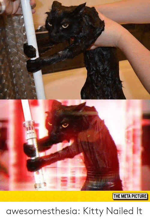 Tumblr, Blog, and Http: THE META PICTURE awesomesthesia:  Kitty Nailed It