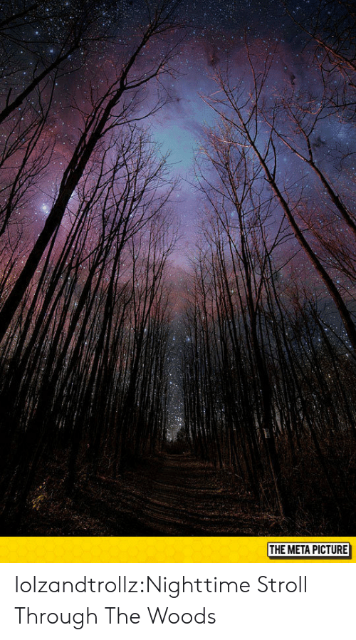 Tumblr, Blog, and Com: THE META PICTURE lolzandtrollz:Nighttime Stroll Through The Woods