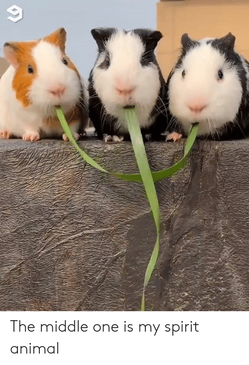 Dank, Animal, and Spirit: The middle one is my spirit animal
