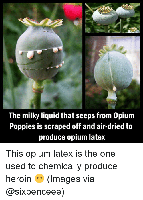 Poppies: The milky liquid that seeps from 0pium  Poppies is scraped off and air-dried to  produce opium latex This opium latex is the one used to chemically produce heroin 😶 (Images via @sixpenceee)