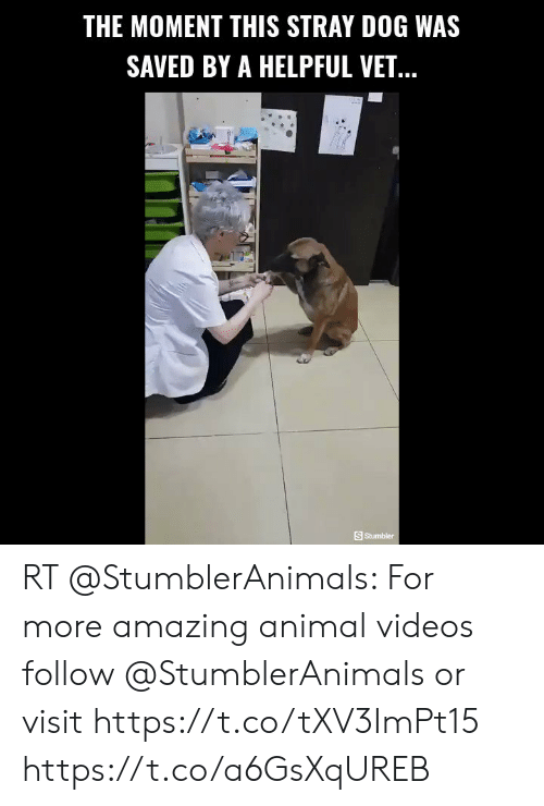 Animal Videos: THE MOMENT THIS STRAY DOG WAS  SAVED BY A HELPFUL VET...  SStumbler RT @StumblerAnimals: For more amazing animal videos follow @StumblerAnimals or visit https://t.co/tXV3ImPt15 https://t.co/a6GsXqUREB