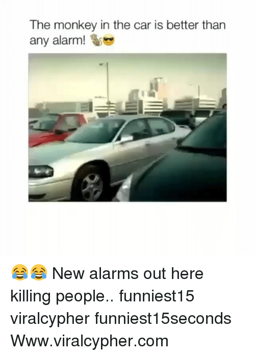Funny, Alarm, and Monkey: The monkey in the car is better than  any alarm! 😂😂 New alarms out here killing people.. funniest15 viralcypher funniest15seconds Www.viralcypher.com