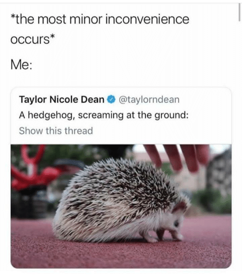 nicole: *the most minor inconvenience  oCcurs*  Me:  Taylor Nicole Dean@taylorndean  A hedgehog, screaming at the ground:  Show this thread