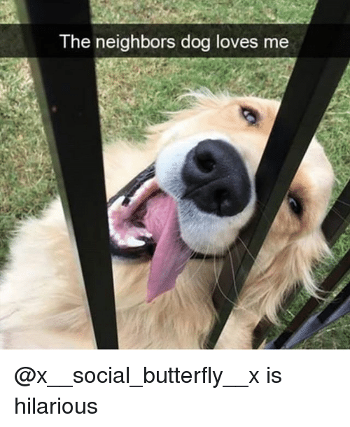 Funny, Butterfly, and Neighbors: The neighbors dog loves me @x__social_butterfly__x is hilarious