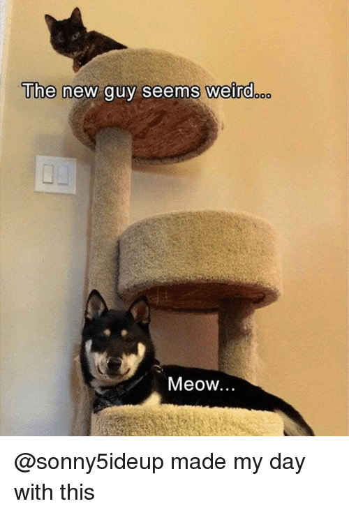 Funny, Weird, and Girl Memes: The  new guy seems Weird  Meow.. @sonny5ideup made my day with this