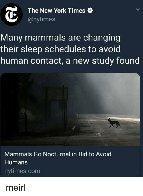 The New York Times: The New York Times  @nytimes  Many mammals are changing  their sleep schedules to avoid  human contact, a new study found  Mammals Go Nocturnal in Bid to Avoid  Humans  nytimes.com meirl