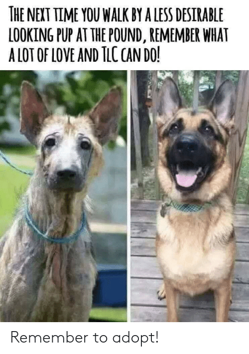 PUP: THE NEXT TIME YOU WALK BY A LESS DESIRABLE  LOOKING PUP AT THE POUND, REMEMBER WHAT  A LOT OF LOVE AND TLC CAN DO! Remember to adopt!