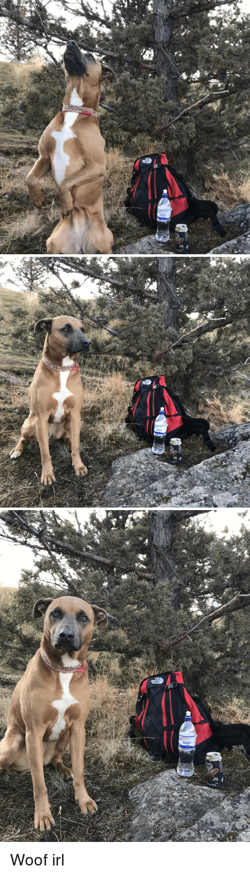 Dog IRL: THE  NORTH  FACE  1PA Woof irl