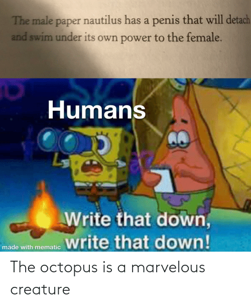 Marvelous: The octopus is a marvelous creature