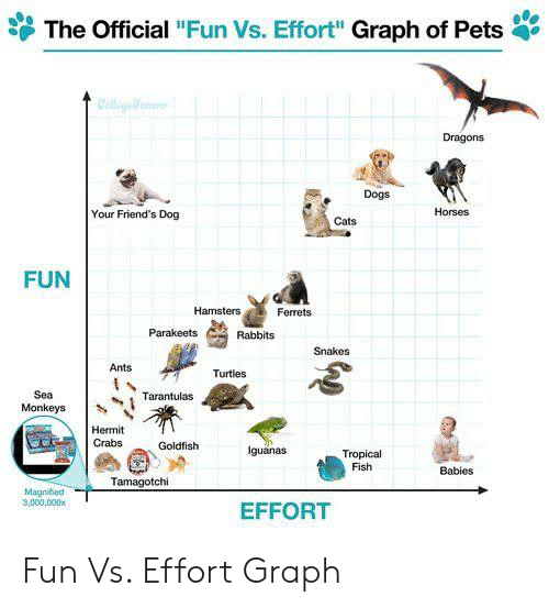 """Cats, Dogs, and Friends: The Official """"Fun Vs. Effort"""" Graph of Pets  Colligyeifam  Dragons  Dogs  Horses  Your Friend's Dog  Cats  FUN  Hamsters  Ferrets  Parakeets  Rabbits  Snakes  Ants  Turtles  Sea  Tarantulas  Monkeys  Hermit  Crabs  Goldfish  Iguanas  Tropical  Fish  Babies  Tamagotchi  Magnified  3,000,000x  EFFORT Fun Vs. Effort Graph"""