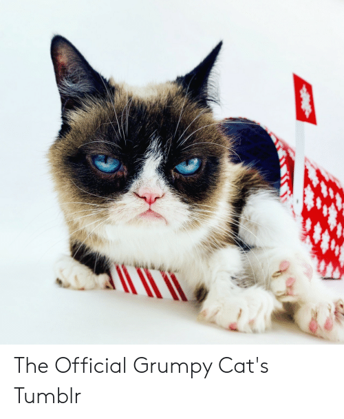 Official Grumpy: The Official Grumpy Cat's Tumblr