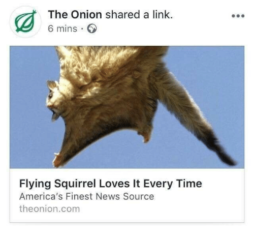 News, The Onion, and Link: The Onion shared a link.  6 mins  Flying Squirrel Loves It Every Time  America's Finest News Source  theonion.com