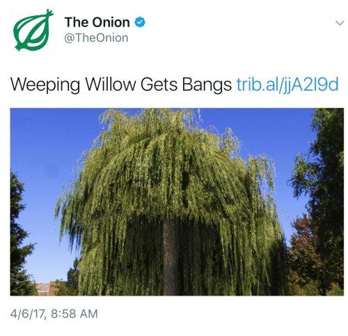 willow: The Onion  @TheOnion  Weeping Willow Gets Bangs trib.al/ljA219d  4/6/17, 8:58 AM