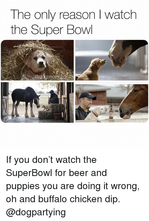 Beer, Memes, and Puppies: The only reason I watch  the Super Bowl  @dogsbeinebasic If you don't watch the SuperBowl for beer and puppies you are doing it wrong, oh and buffalo chicken dip. @dogpartying