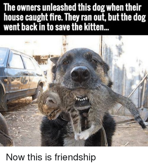 Fire, House, and Friendship: The owners unleashed this dog when their  house caught fire. They ran out, but the dog  went back in to save the kitten.. Now this is friendship