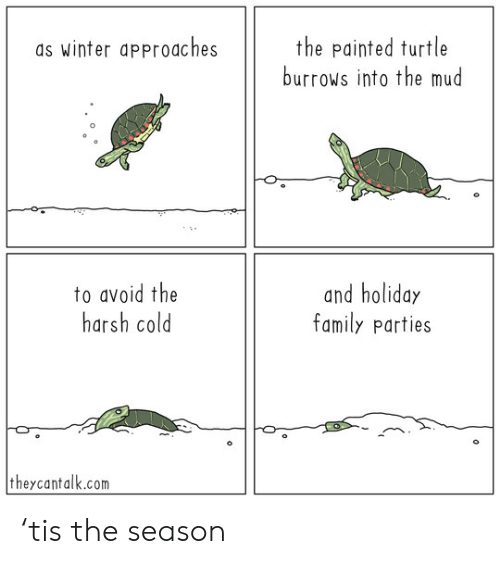 painted turtle: the painted turtle  burrows into the mud  as winter approaches  to avoid the  harsh cold  and holiday  family parties  theycantalk.com 'tis the season
