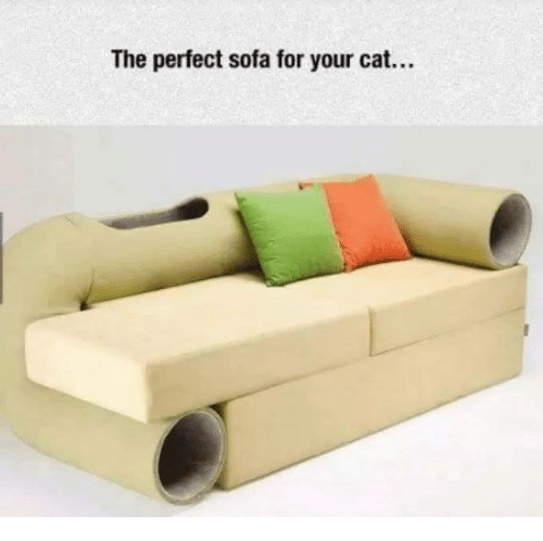 The Perfect Sofa For Your Cat Meme On Awwmemes Com