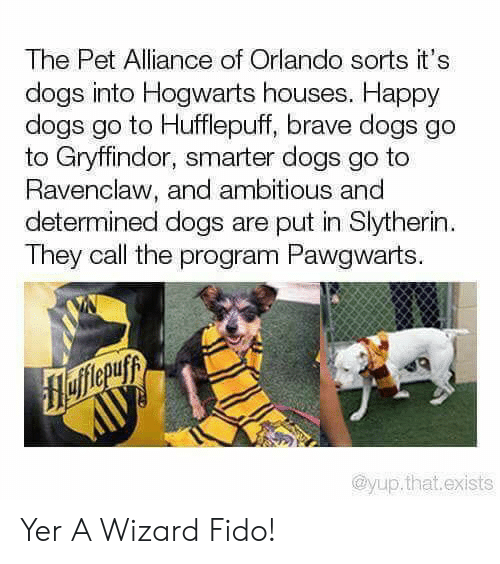 Ambitious: The Pet Alliance of Orlando sorts it's  dogs into Hogwarts houses. Happy  dogs go to Hufflepuff, brave dogs go  to Gryffindor, smarter dogs go to  Ravenclaw, and ambitious and  determined dogs are put in Slytherin  They call the program Pawgwarts.  flefferuyy  AUУ  @yup.that.exists Yer A Wizard Fido!