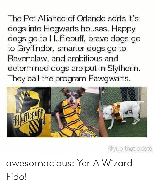 Ambitious: The Pet Alliance of Orlando sorts it's  dogs into Hogwarts houses. Happy  dogs go to Hufflepuff, brave dogs go  to Gryffindor, smarter dogs go to  Ravenclaw, and ambitious and  determined dogs are put in Slytherin  They call the program Pawgwarts.  flefferuyy  AUУ  @yup.that.exists awesomacious:  Yer A Wizard Fido!