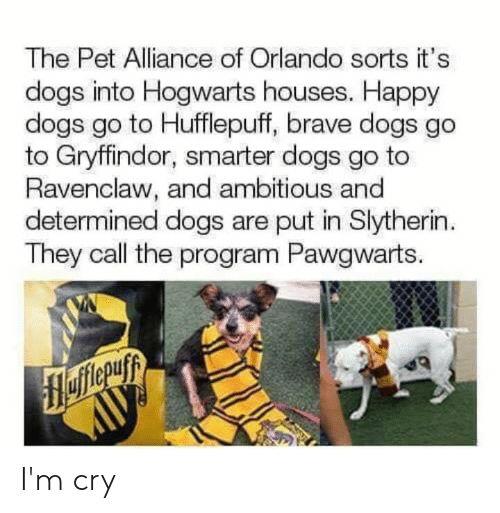 Ambitious: The Pet Alliance of Orlando sorts it's  dogs into Hogwarts houses. Happy  dogs go to Hufflepuff, brave dogs go  to Gryffindor, smarter dogs go to  Ravenclaw, and ambitious and  determined dogs are put in Slytherin  They call the program Pawgwarts. I'm cry