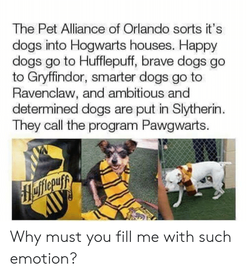 Ambitious: The Pet Alliance of Orlando sorts it's  dogs into Hogwarts houses. Happy  dogs go to Hufflepuff, brave dogs go  to Gryffindor, smarter dogs go to  Ravenclaw, and ambitious and  determined dogs are put in Slytherin  They call the program Pawgwarts. Why must you fill me with such emotion?