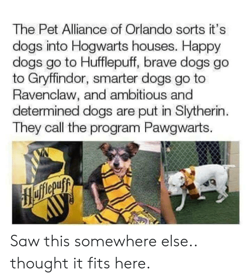 Dogs, Gryffindor, and Saw: The Pet Alliance of Orlando sorts it's  dogs into Hogwarts houses. Happy  dogs go to Hufflepuff, brave dogs go  to Gryffindor, smarter dogs go to  Ravenclaw, and ambitious and  determined dogs are put in Slytherin  They call the program Pawgwarts. Saw this somewhere else.. thought it fits here.