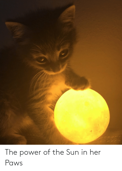 Paws: The power of the Sun in her Paws