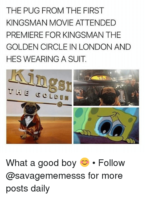 Memes, Good, and London: THE PUG FROM THE FIRST  KINGSMAN MOVIE ATTENDED  PREMIERE FOR KINGSMAN THE  GOLDEN CIRCLE IN LONDON ANDD  HES WEARING A SUIT  ngs What a good boy 😊 • Follow @savagememesss for more posts daily