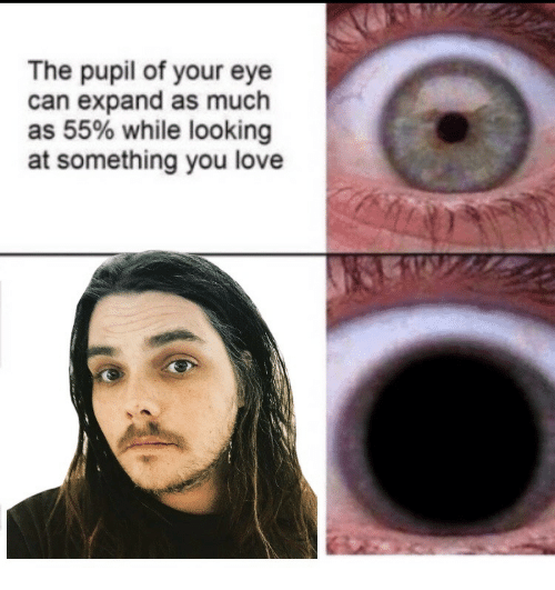 Pupil: The pupil of your eye  can expand as much  as 55% while looking  at something you love