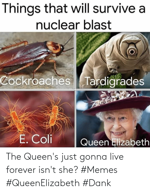 Forever: The Queen's just gonna live forever isn't she? #Memes #QueenElizabeth #Dank