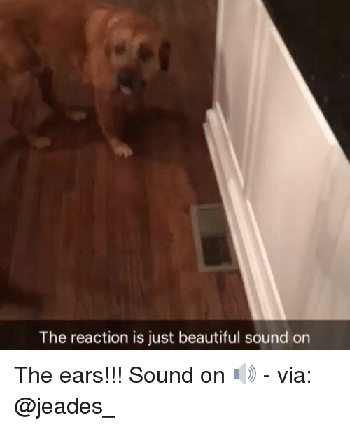 Beautiful, Memes, and 🤖: The reaction is just beautiful sound on The ears!!! Sound on 🔊 - via: @jeades_