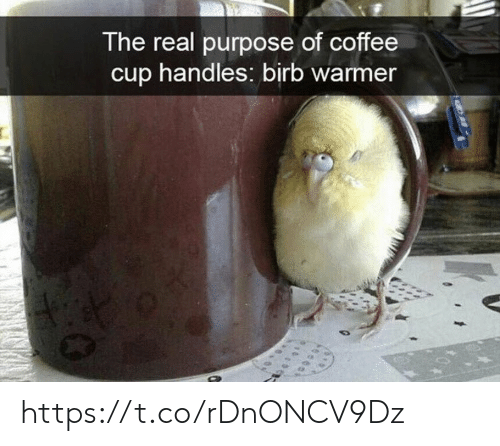 handles: The real purpose of coffee  cup handles: birb warmer https://t.co/rDnONCV9Dz