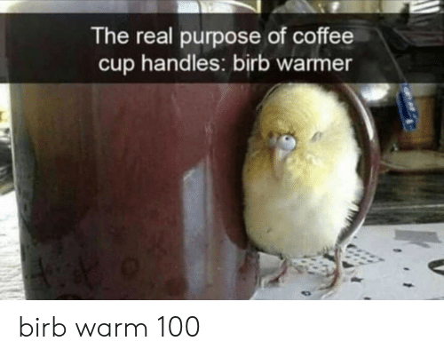 purpose: The real purpose of coffee  handles: birb warmer  cup birb warm 100