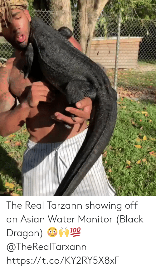 Asian, Black, and The Real: The Real Tarzann showing off an Asian Water Monitor (Black Dragon) 😳🙌💯 @TheRealTarxann https://t.co/KY2RY5X8xF
