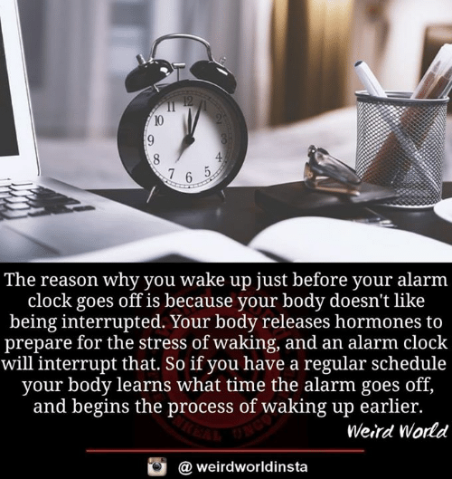 Clock, Memes, and Weird: The reason why you wake up just before your alarm  clock goes off is because your body doesn't like  being interrupted. Your body releases hormones to  prepare for the stress of waking, and an alarm clock  will interrupt that. So if you have a regular schedule  your body learns what time the alarm goes off,  and begins the process of waking up earlier.  Weird World  @ weirdworldinsta
